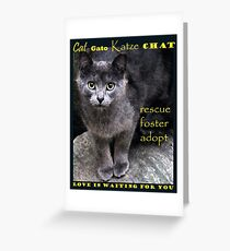 Rescue, Foster, Adopt Greeting Card