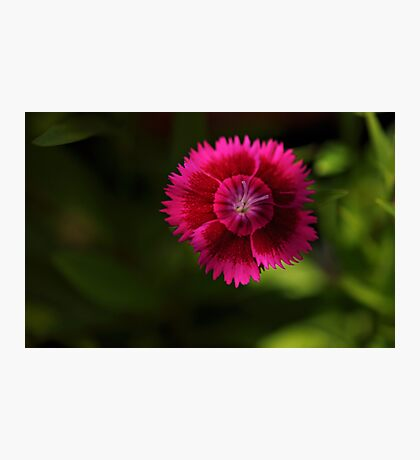 bright spot Photographic Print