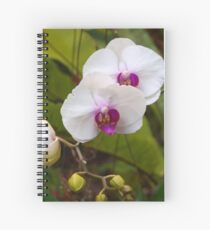 Orchid, Phalanopsis. Spiral Notebook