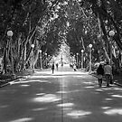 Hyde Park, Sydney by BRogers