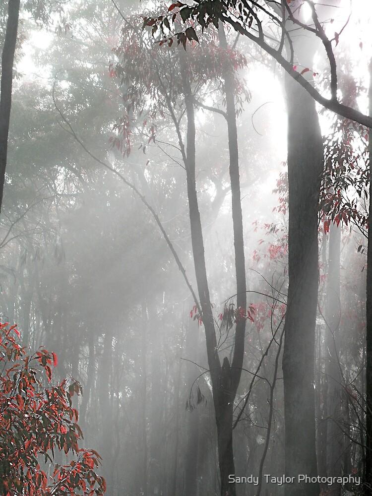 Morning Mist by Sandy  Taylor Photography