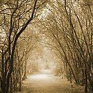 Autumn Walk by Samantha Higgs