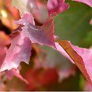 «Autumn Leaves» de imaginadesigns