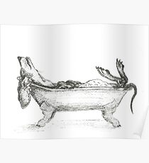 Dachshund in a bathtub illustration, pen and ink Poster