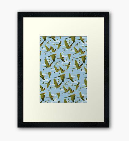 Parakeet Migration Impression encadrée
