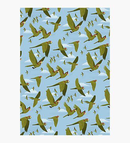 Parakeet Migration Photographic Print
