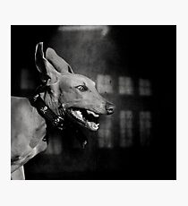 Dogs with game face on .27 Photographic Print