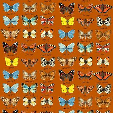 butterflies  by DruPictures