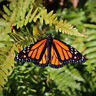 Monarch Resting by Cynthia48