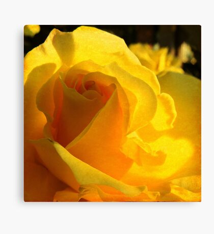 A Rose for My Mother  Canvas Print