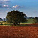 Red Soil Dorrigo by Clare Colins