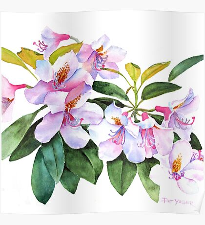 Spring Rhody Watercolor Poster