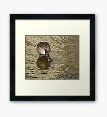 Monochrome Goose Framed Print