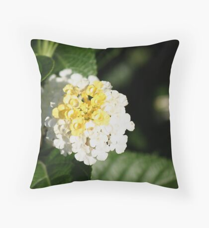 Sundrops 1 Throw Pillow