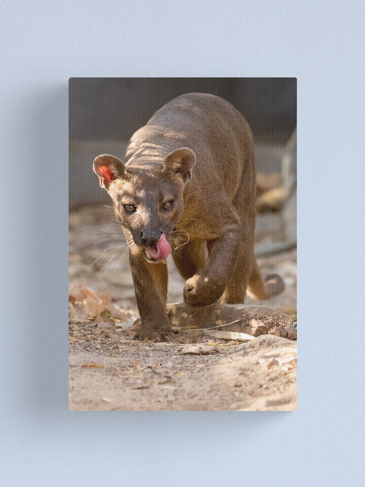 Alternate view of Prowling fosa Canvas Print