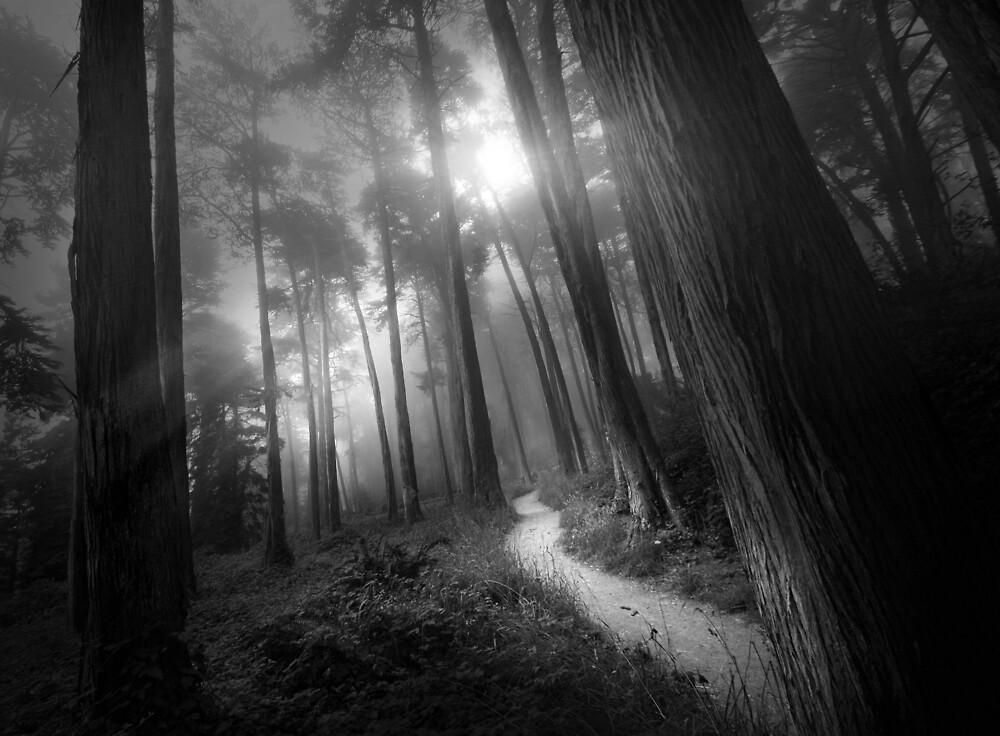 Presidio Path (B&W) by Richard Mason