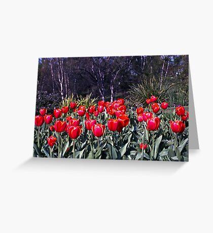 Spring—Royal Tasmanian Botanical Gardens Greeting Card