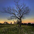 Lone Tree by Steve Bass