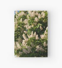 tree of blooming Aesculus Hardcover Journal