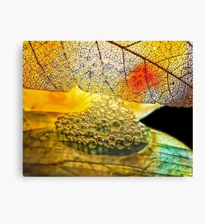 Seeds Upon the Field Canvas Print