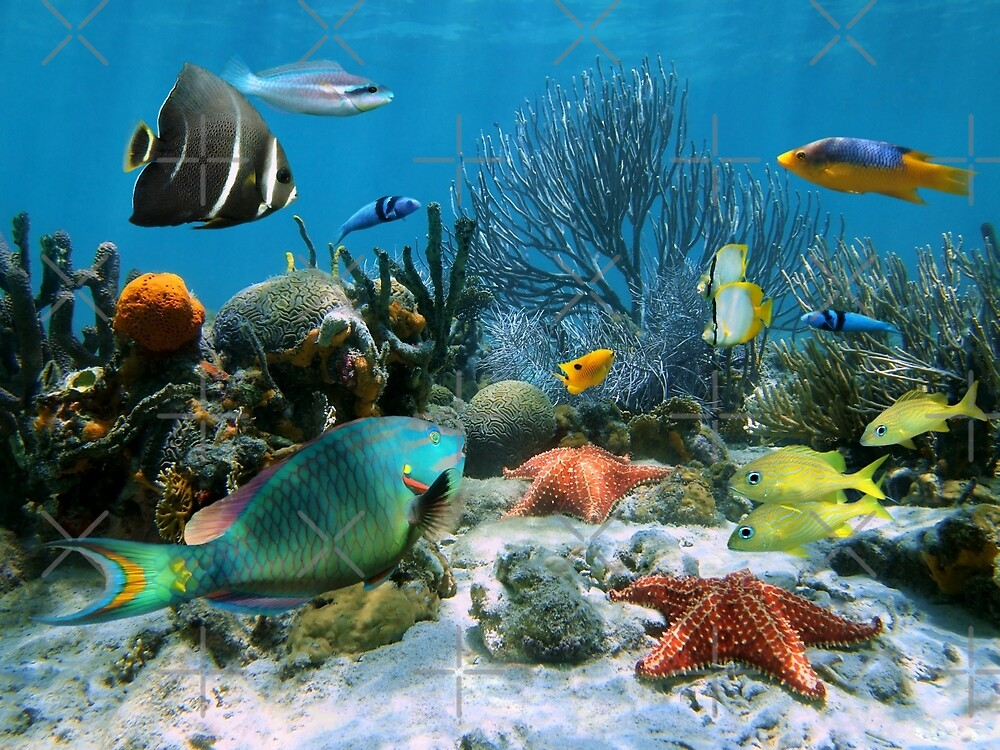 Coral reef and starfish by Dam - www.seaphotoart.com