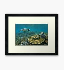 A green sea turtle underwater over coral reef Framed Print