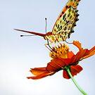 Superfly by kibishipaul
