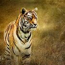 Tiger in the grass by Brian Tarr