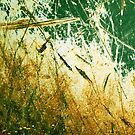 gold by Lynne Prestebak