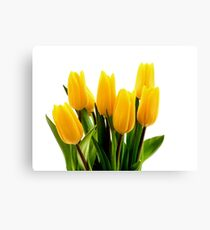 Fresh Yellow Tulips Canvas Print