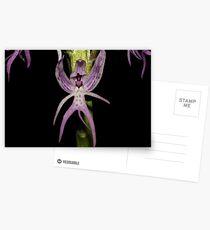 Orchis italica Postcards