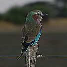 Namebia Bird by Gilberte