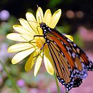 The King Of Butterflies by Dawne Dunton
