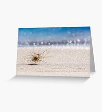 Summer Roll Greeting Card