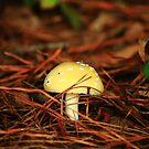 Toad Stool by Adam Kuehl