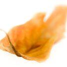 Autumn leaf by Su Walker