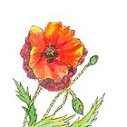 Red Poppy pen and wash by Laura Wilson