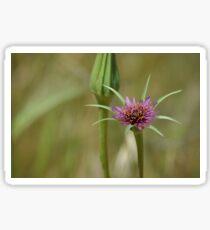 Dandelion in bloom Sticker