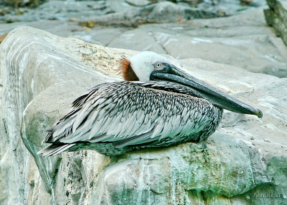 Pelican Blending In by AnnDixon