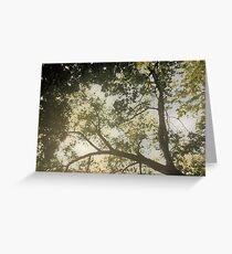 Sunlit Tree Greeting Card