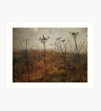 Along the Hedgerows Art Print
