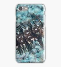 Dragon Wrasse iPhone Case/Skin