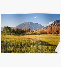 Mount Timpanogos from Cascade Meadows Poster