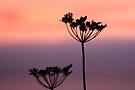 Colors in the Morning Sky by Jo Nijenhuis