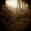 Mountain Steps (Holga) by Richard Mason