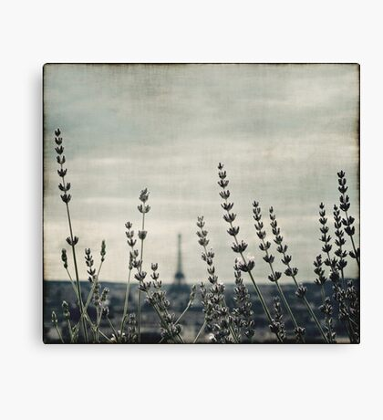 French Lavender III Canvas Print