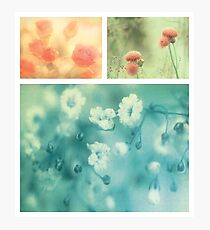 Collection ~ Flowers Photographic Print