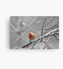 Melba Finch - Selective Coloring - Wildlife Colors of Gold and Red Canvas Print
