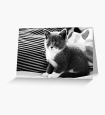 Kitten IV Greeting Card
