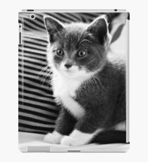 Kitten IV iPad Case/Skin